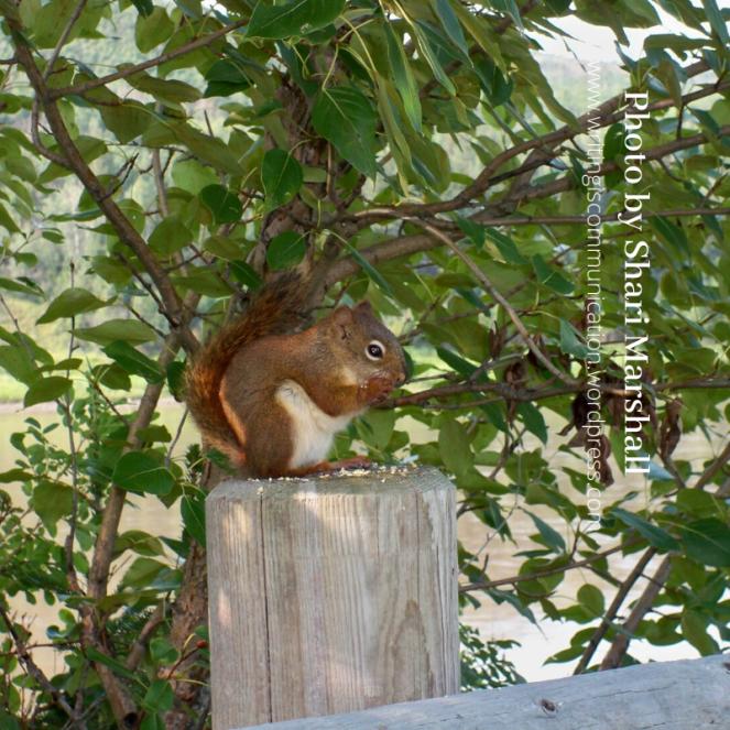 veloci squirrel